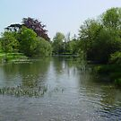 Tranquil Lake by Richard Elston