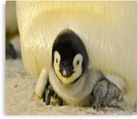 Cute Animals - Penguin by taraandtash