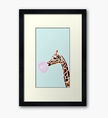 Bubble gum blowing giraffe  Framed Print