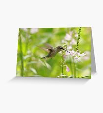 Hummer And Obedient Plant Greeting Card