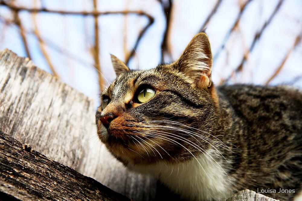 back yard tiger by Louisa Jones