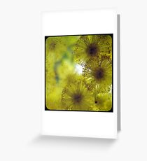 Golden Wattle  Greeting Card