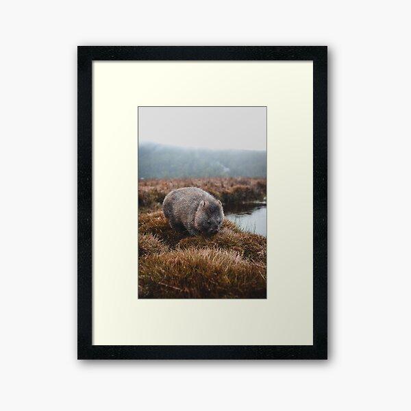 Tasmanian Wombat Framed Art Print