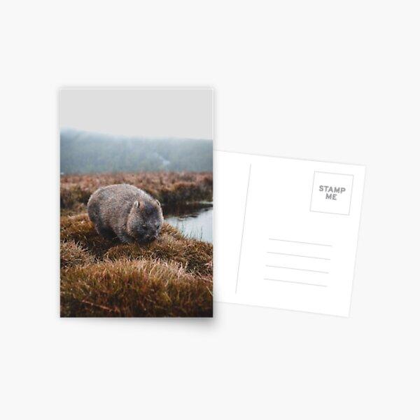 Tasmanian Wombat Postcard