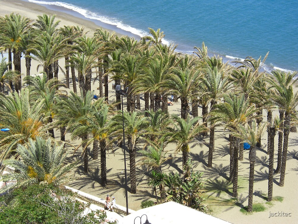 Palms on the beach by jackitec