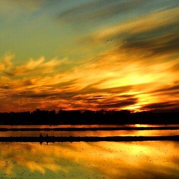Golden Ricefield Sunset by WildestArt