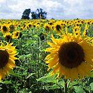 Sun flowers by Mikhail Lavrenov