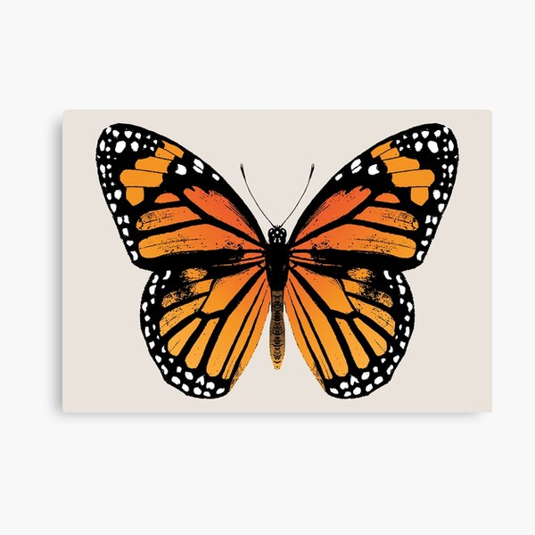 Monarch Butterfly | Vintage Butterflies |  Canvas Print