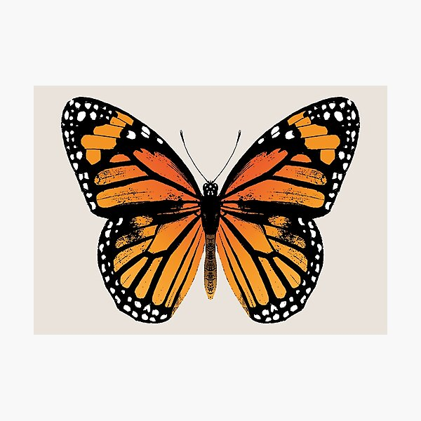 Monarch Butterfly | Vintage Butterflies |  Photographic Print