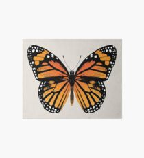 Monarch Butterfly | Vintage Butterflies |  Art Board Print