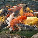 Koi Fish (1 of 3) by Rita  H. Ireland