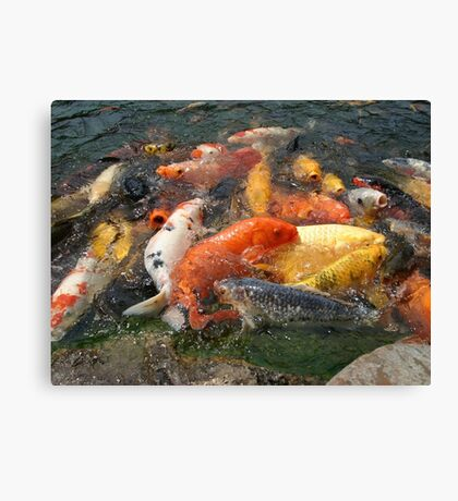 Koi Fish (1 of 3) Canvas Print