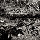 Tasmanian Rainforest 2 by Andrew Smyth
