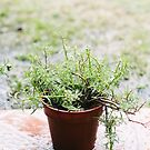 green plant in the rain by sleepwalker