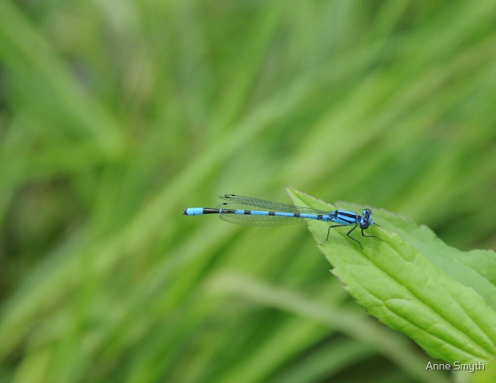 Blue Damsel by Anne Smyth