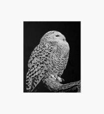 Snowy Owl Art Board
