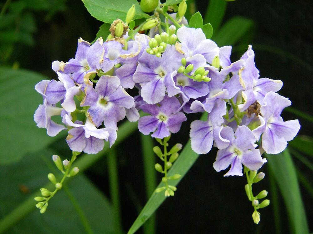 purple flowers by Sheila McCrea