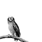 Scratchy Owl by UberAutomaton