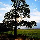 Catalpa Tree by Pamela Hubbard