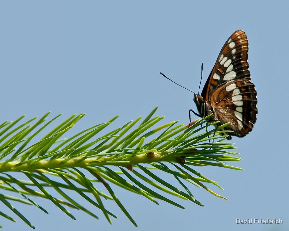Butterfly Summer by David Friederich