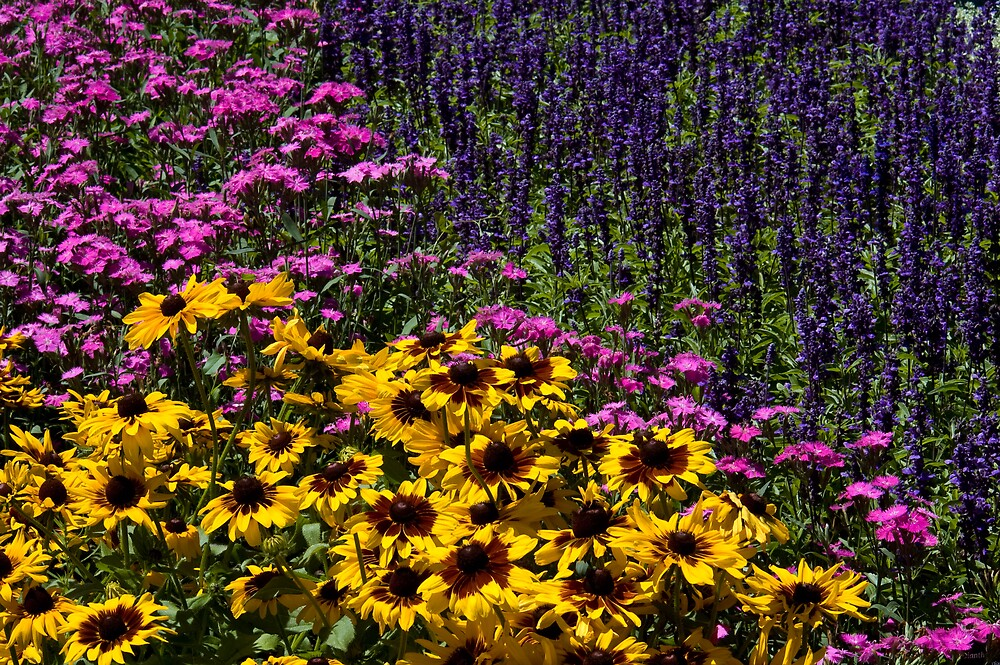 Colorful Flowers by Krys Squires