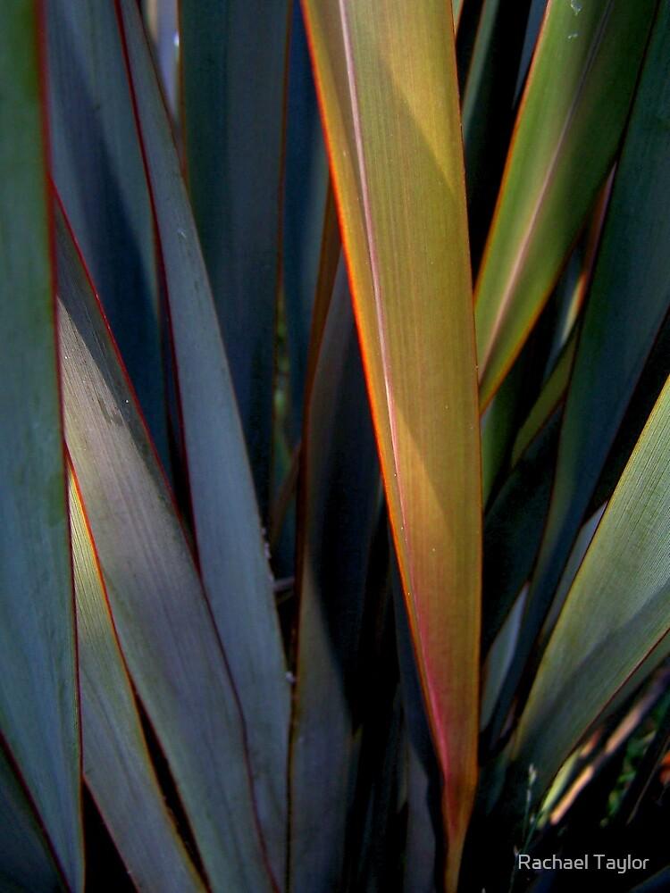 Rustic Leaves by Rachael Taylor