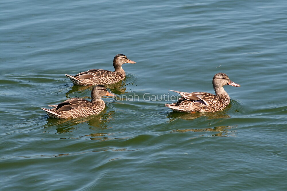 Three's a crowd by Jonah Gautier