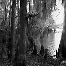 Lost In Time - Caddo Lake near Uncertain, Texas by Betty Northcutt