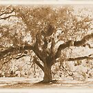 Aged Florida Oak with Spanish Moss by Tranquility