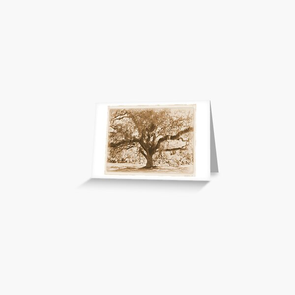 Aged Florida Oak with Spanish Moss Greeting Card