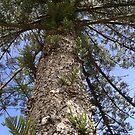 Huge Tree! by MaddyPaddy