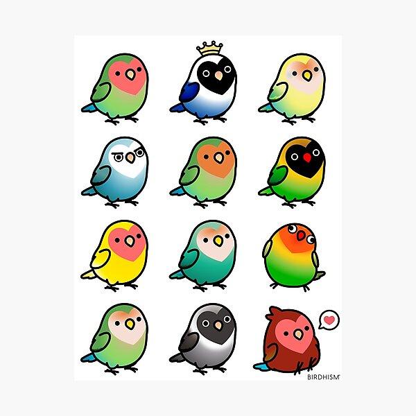 Chubby Lovebirds Photographic Print