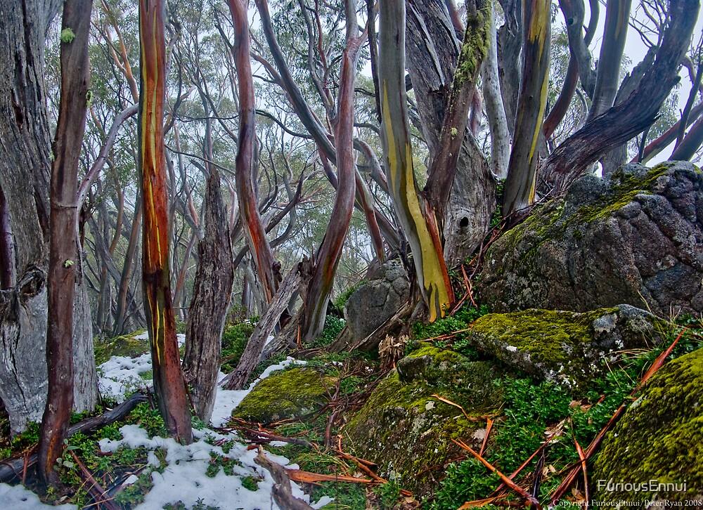 Baw Baw Alpine Woodland by FuriousEnnui