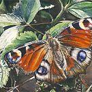 Butterfly by J-C Saint-Pô