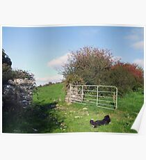 Irish farm scene Poster