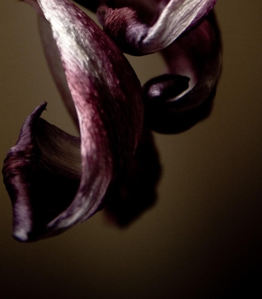 tulip by leecemee