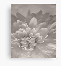 Monochrome Chrysanthemum Close-up  Canvas Print