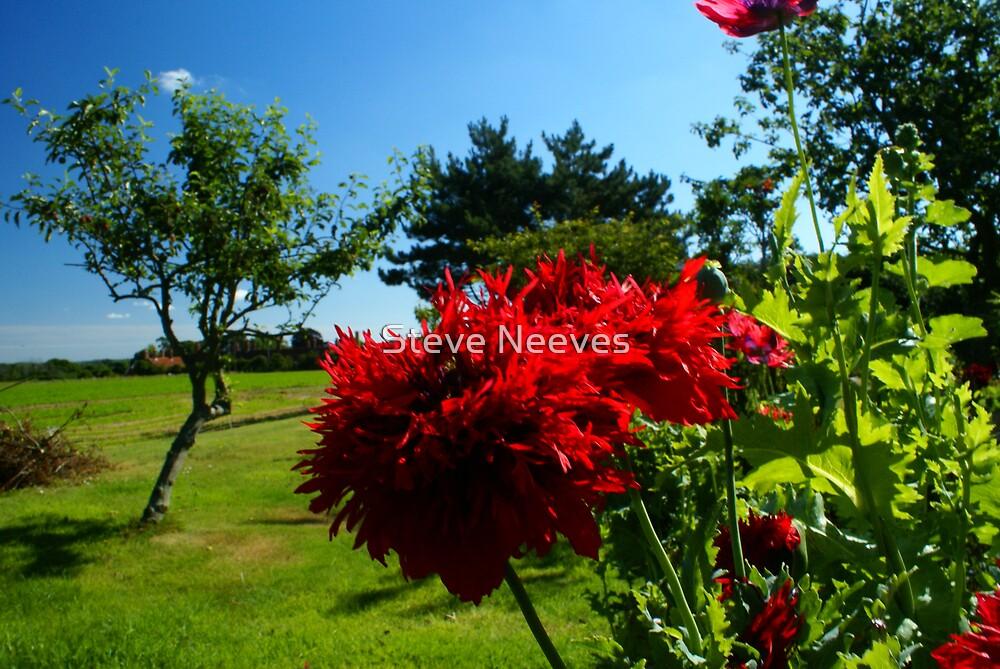 Mums garden  by Steve Neeves