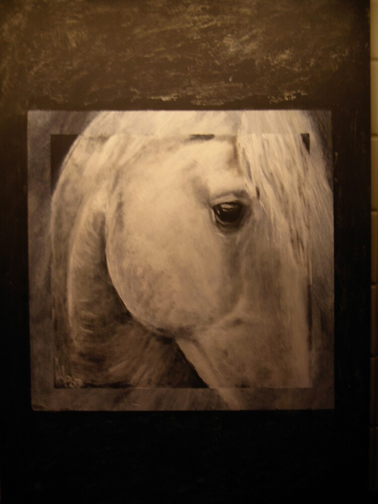 Andalusian Horse by Shaman