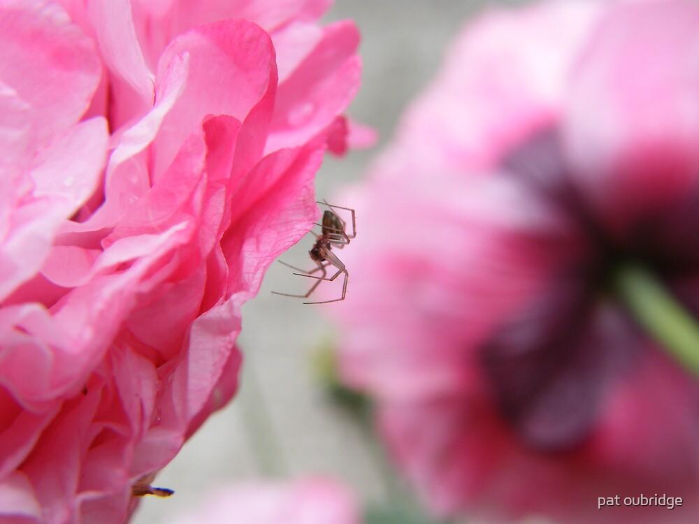 Macro Spider by pat oubridge