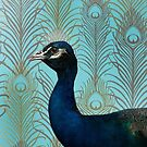 Peacock by Sandra Willis