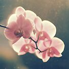 Orchids in magic hour light by Karin Elizabeth
