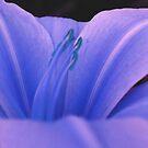 Blue Hue by HeavenOnEarth
