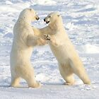Dance of the white bears (I) by Anthony Brewer