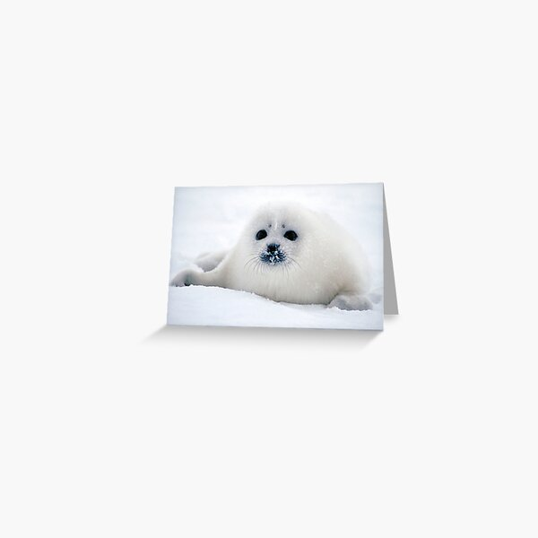 Ice puppy Greeting Card