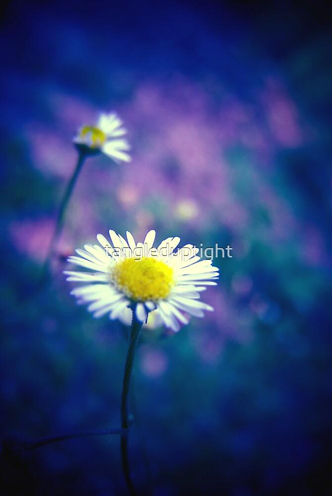 wallflowers by tangleduptight