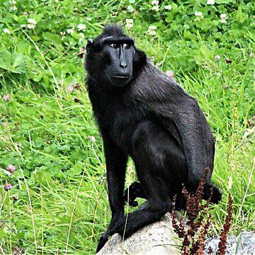 Sulawesi Macaque by Ladymoose