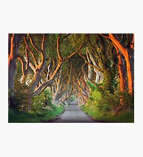 The Dark Hedges -  Game of Thrones - County Antrim -  Northern Ireland Photographic Print