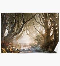 The Dark Hedges   County Antrim  Northern Ireland Poster