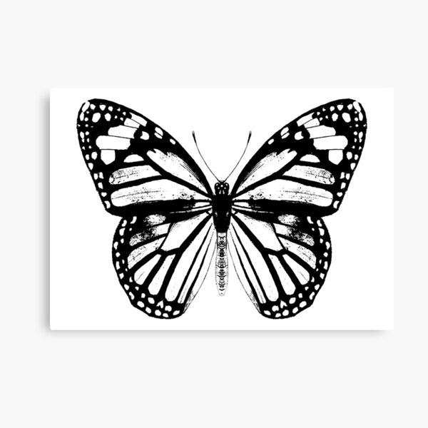 Monarch Butterfly | Vintage Butterflies | Black and White |  Canvas Print